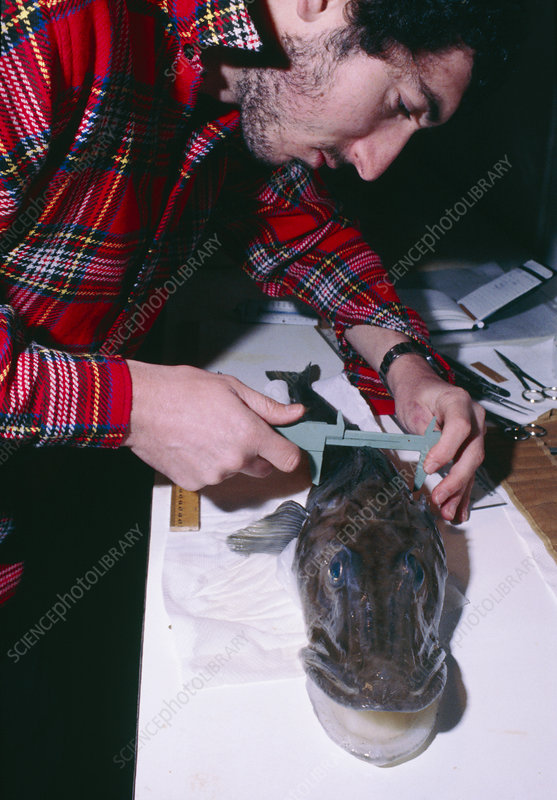 Researcher measuring an ice fish