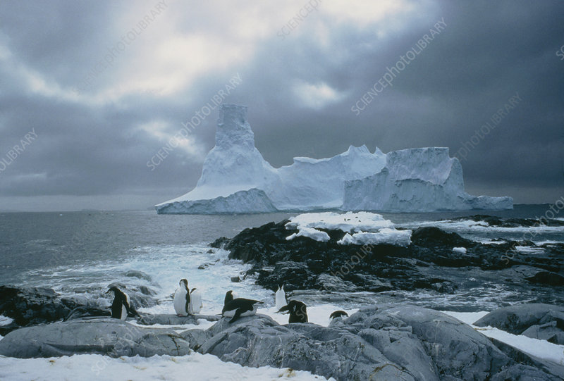 Icebergs aground in Biscoe Islands, Antarctica