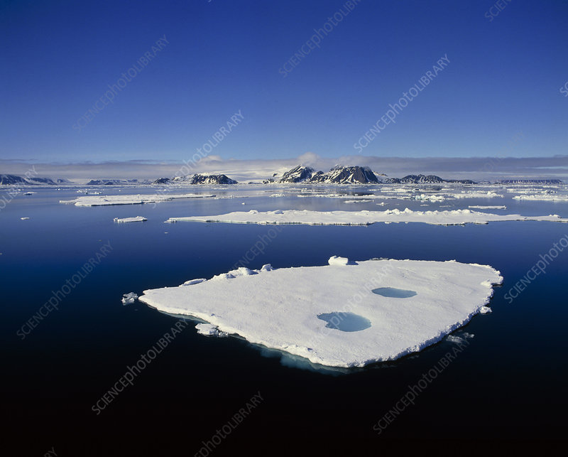 Ice floes off the coast of Spitsbergen