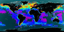 False-col satellite image of world's oceans