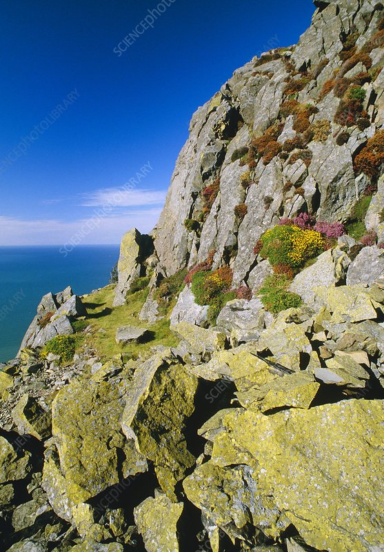 Coastal rocks of North Wales, with lichens.