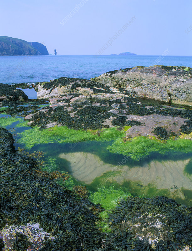 Rock pools in Sandwood Bay, Scotland