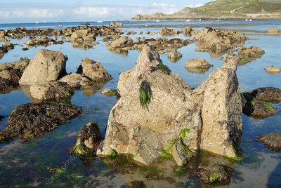 Exposed rocks and tidal pools