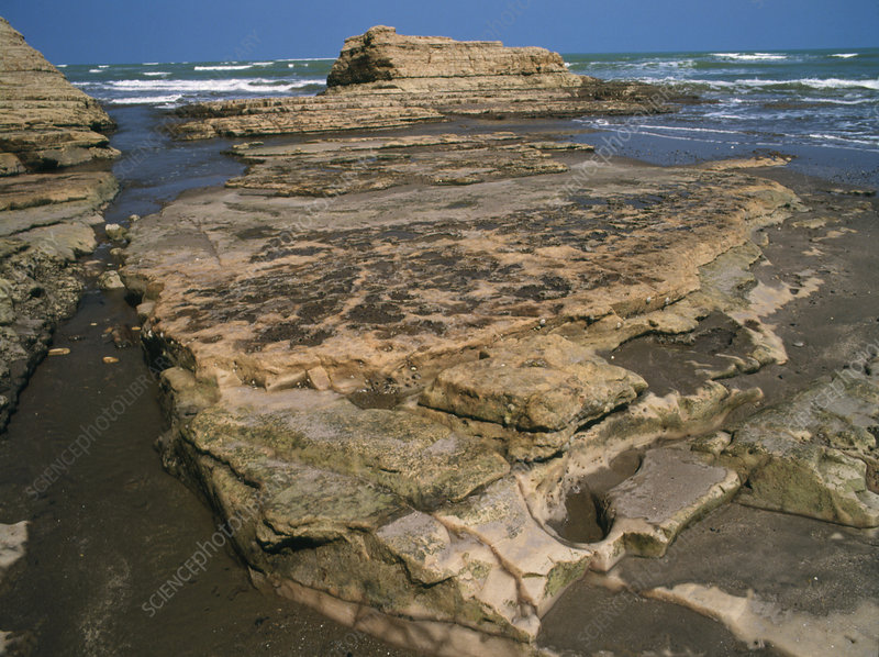 Coastal erosion of mudstone in Ecuador
