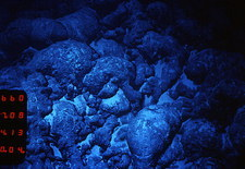 Pillow lava on ocean floor