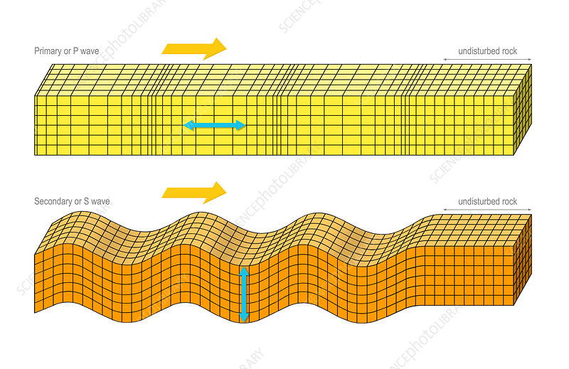 P and S seismic body waves, artwork