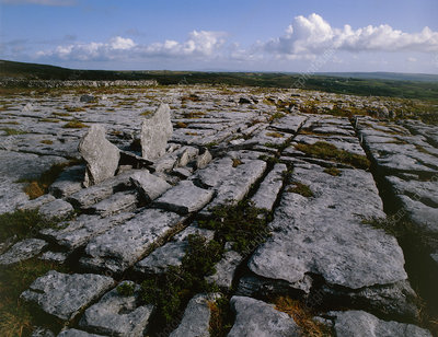 Carboniferous limestone pavement