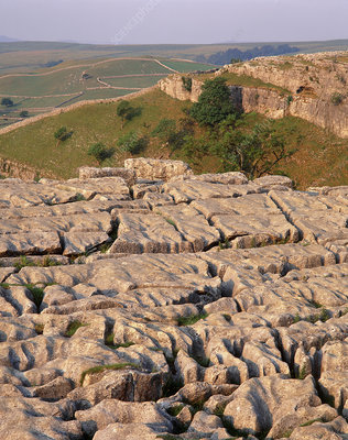 Limestone pavement in Yorkshire