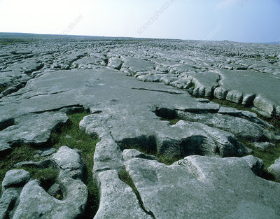 Limestone pavement in Ravenscar, North Yorkshire