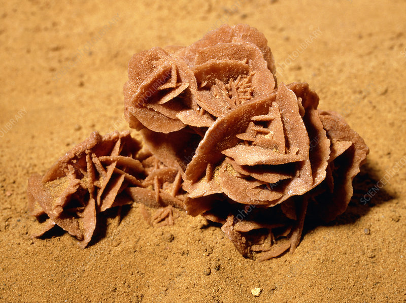 Rosette-shaped gypsum known as a desert rose