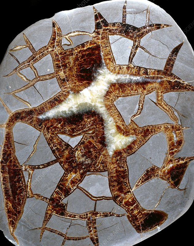 Septarian nodule surface