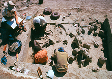 Excavation of fossils