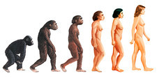 Stages in female human evolution