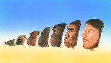 Human evolution, artwork