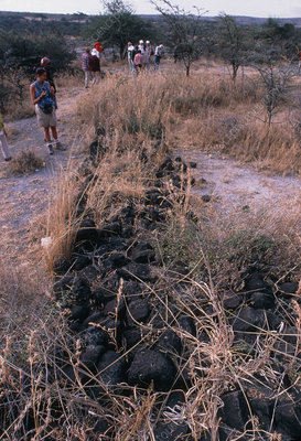 Damage to the trail of the Laetoli footprints.