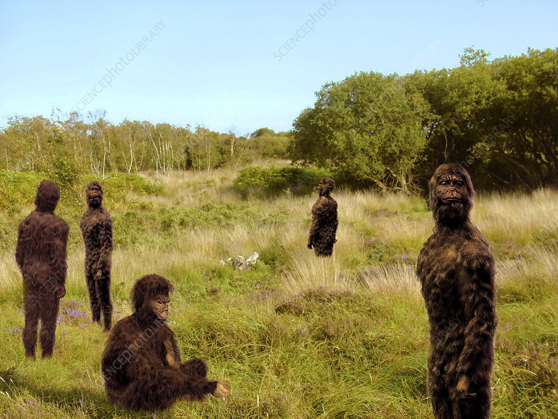 Group of hominids, computer artwork