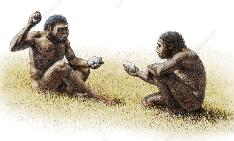 Paranthropus robustus ...