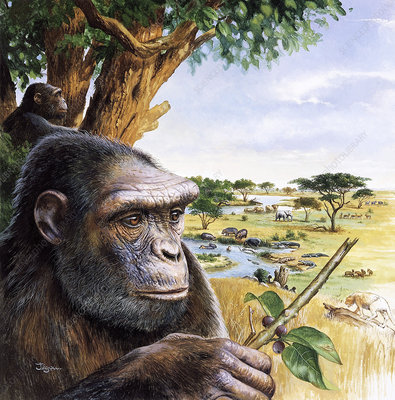 Early hominid
