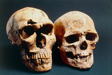 Neanderthal and Cro-Magnon 1 skulls