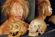 Neanderthal skull and model face, with human skull