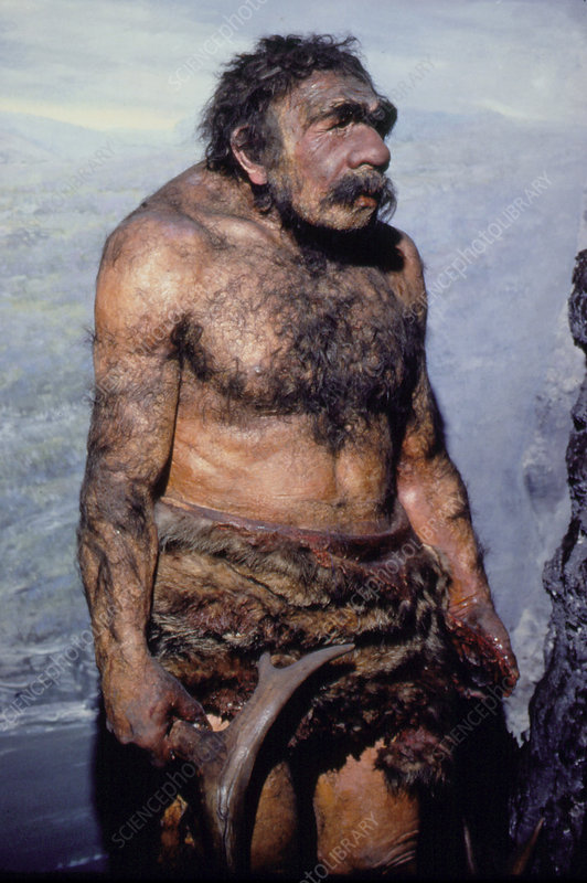 Reconstructed model of a neanderthal man