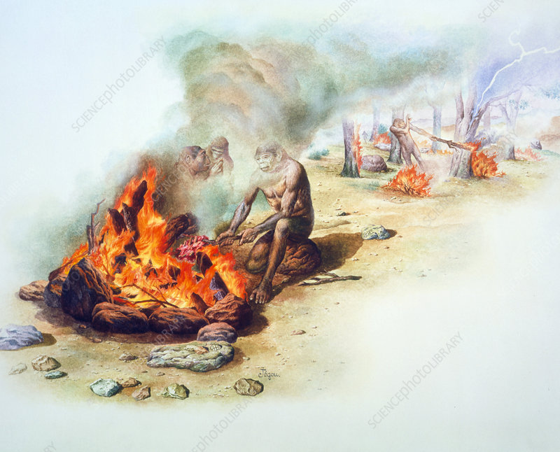 Tribe of Homo erectus cooking with fire