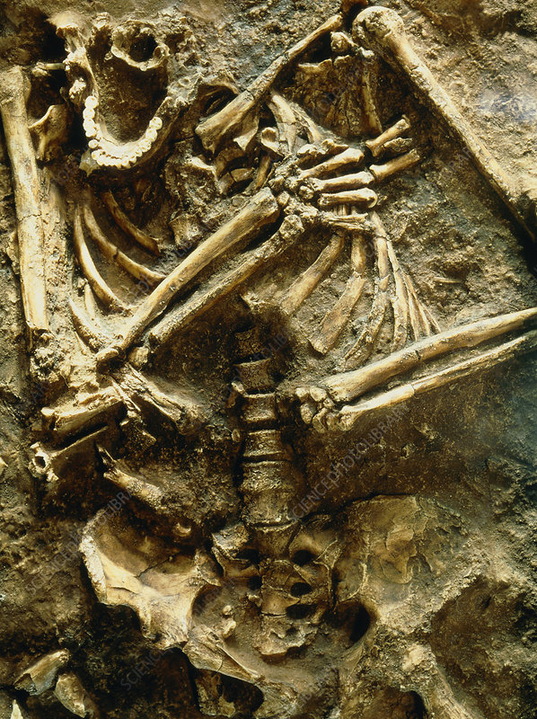 View of the skeleton of a neanderthal