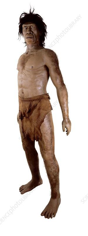 http://www.sciencephoto.com/images/download_wm_image.html/E438119-Homo_ergaster-SPL.jpg?id=694380119