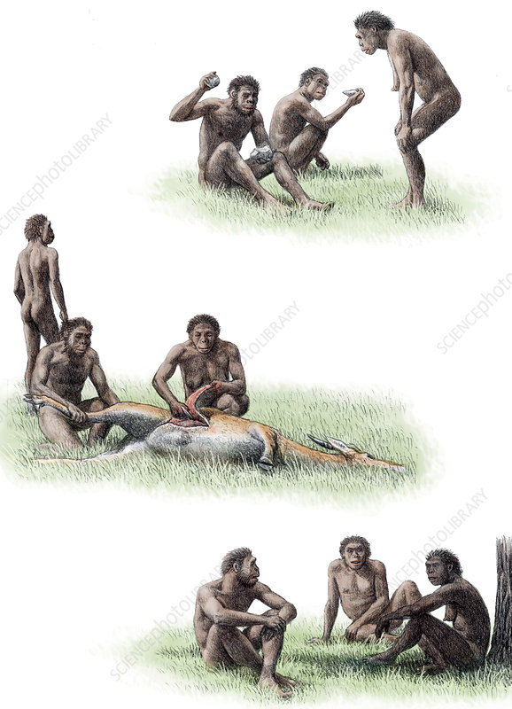 Homo ergaster behaviour