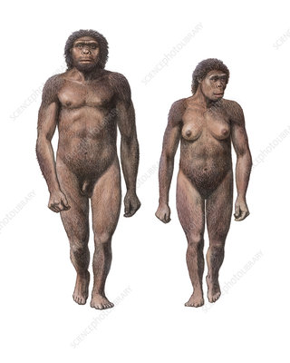Male and female Homo habilis
