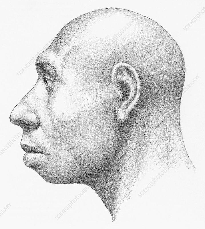 Homo heidelbergensis male