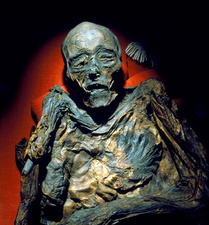 Mummified head and torso of Huldremose Woman