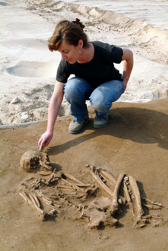 Excavating a prehistoric skeleton