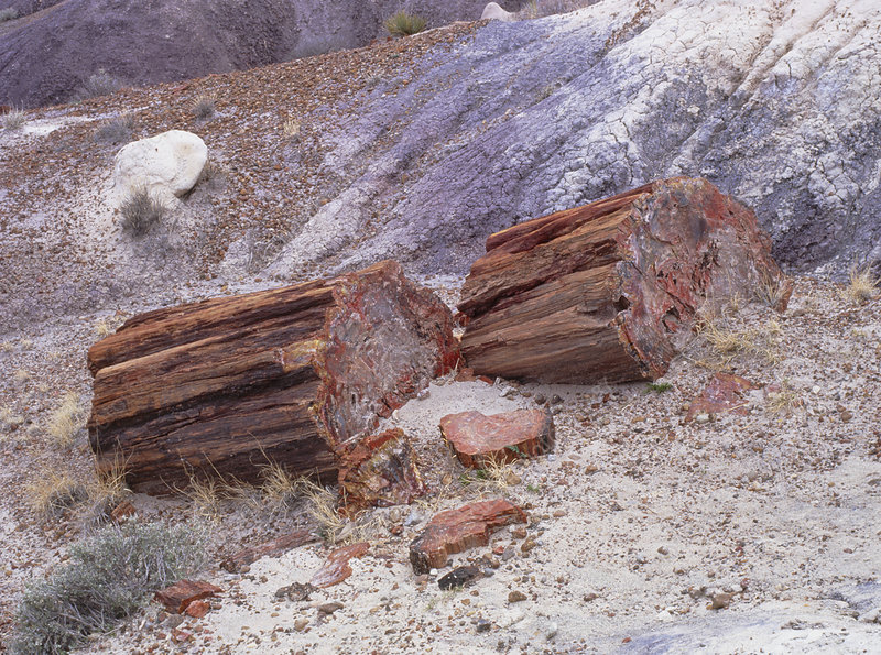Fossilised trees in Petrified Forest National Park