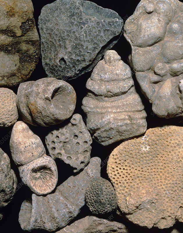 Assortment of fossils from the Silurian period