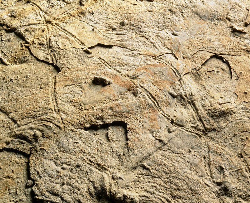 Fossilized traces of invertebrates
