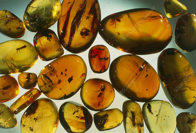 Pieces of amber containing fossilized insects