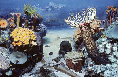 Middle Devonian coral reef scene