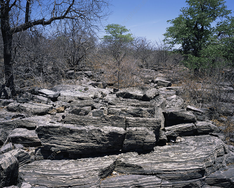 Neoproterozoic carbonate rocks
