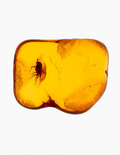 Fly fossilised in amber