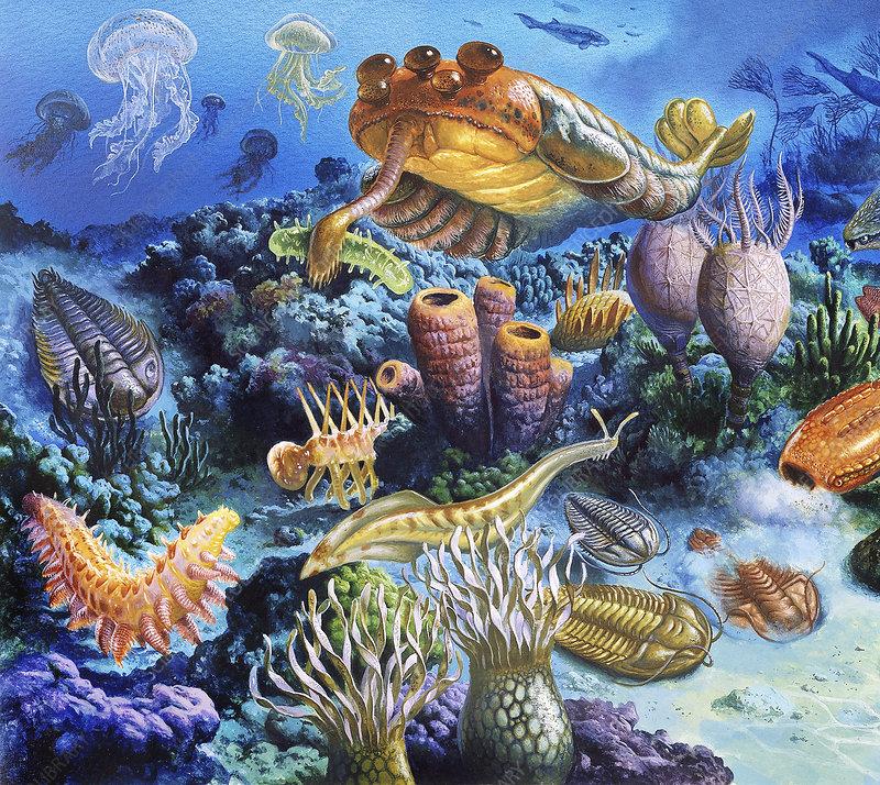Palaeozoic arthropods