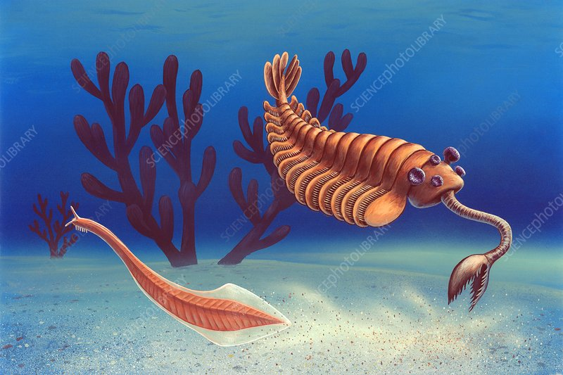 Cambrian animals, artwork