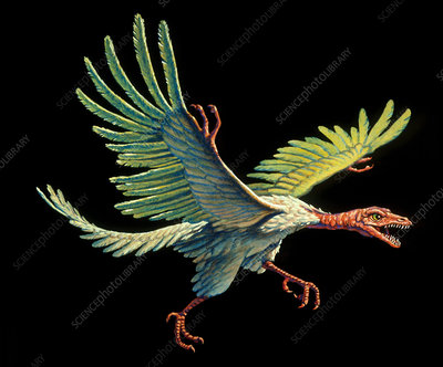 Artwork of an archaeopteryx, the first bird
