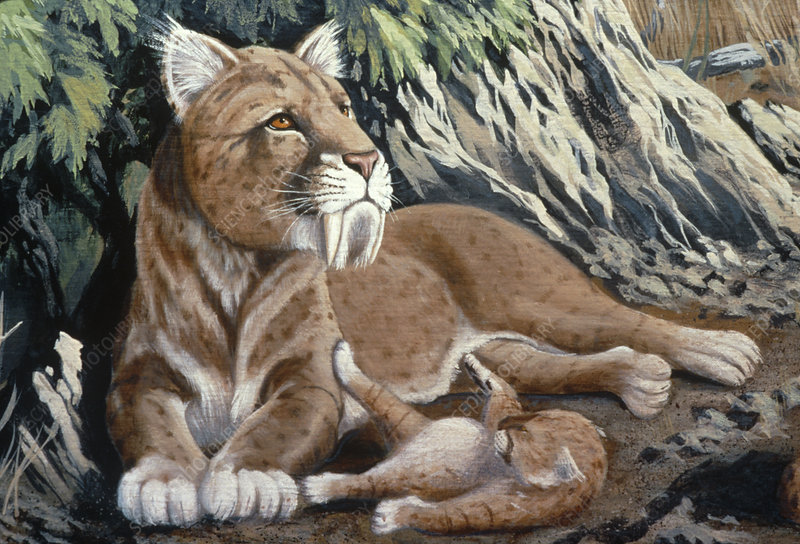 Artwork of a sabre-toothed cat with cub
