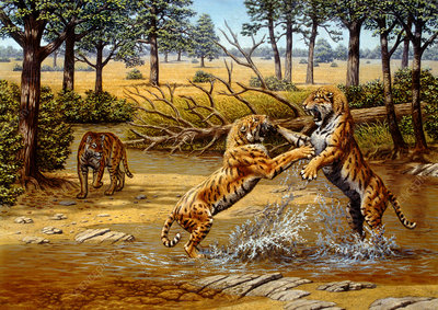 Sabre-toothed cats fighting