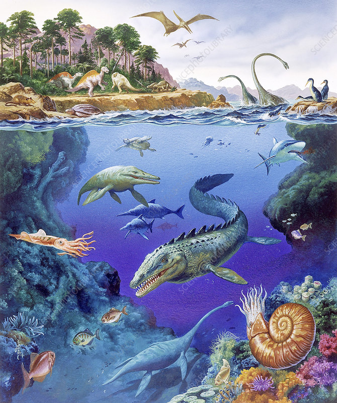 44 >> Cretaceous period fauna - Stock Image E445/0285 - Science Photo Library