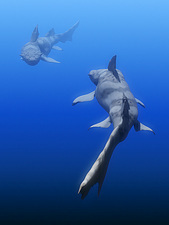 Hybodus shark