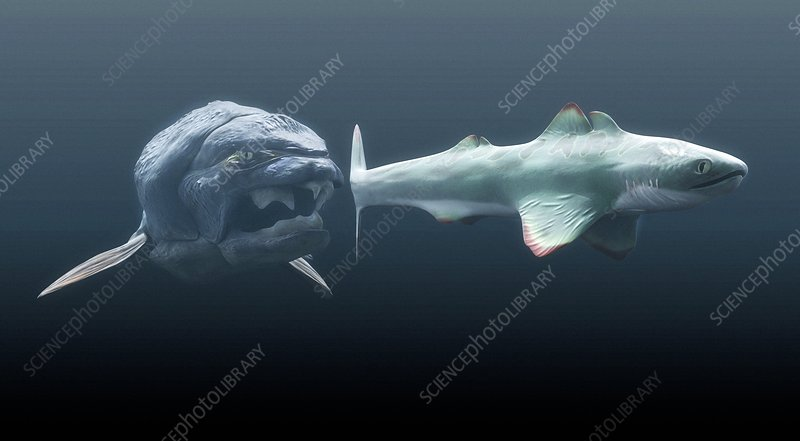 Dunkleosteus prehistoric fish, hunting