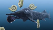 Helicoprion, with ammonites
