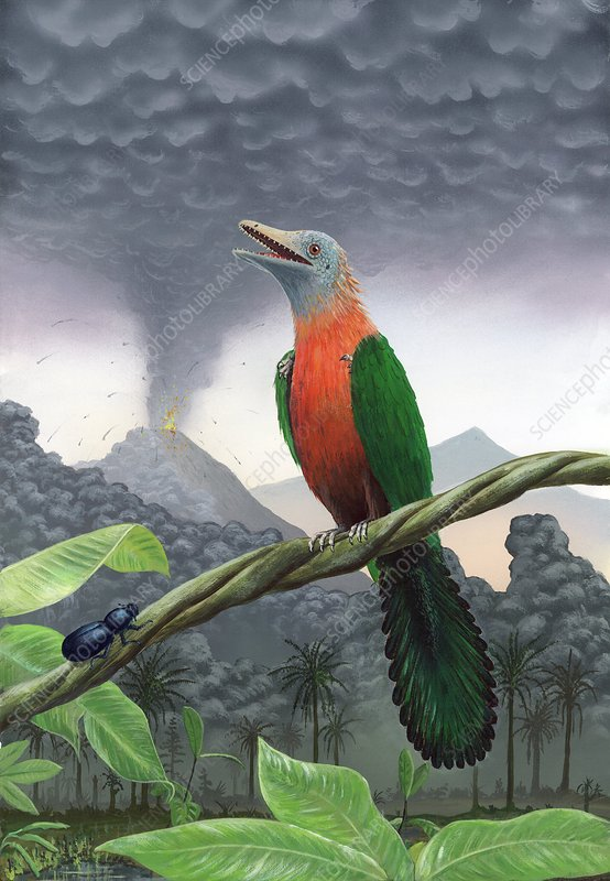 Cretaceous bird, artwork
